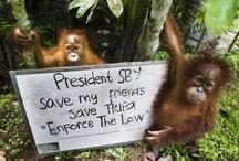 alarming loss of wildlife