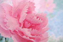 Geboortebloemen / Geboortebloemen, bij iedere maand hoort een bloem (soms meer dan één) welke bloem hoort symbolisch bij welke maand?