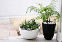 PLANTS FOR INSIDE