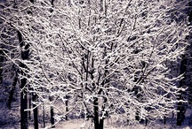 A Lovely Adirondack Winter