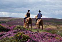 Horse Riding on the Quantock Hills, Somerset / Quantock Trecking, West Bagborough, Taunton, Somerset