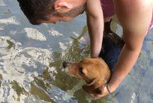 Agata Pretty Beagle / Beagle Dog Puppy Cute
