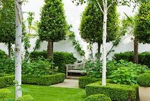 Garden ideas / This is about predominantly green and white garden ideas,plus a sense of formal and topiary and espalier .