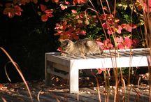 Wie der Herbst ... Autumn-like / Herbstliches: Beauty, Pflege & More