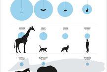 Animaux / Infographies animalières
