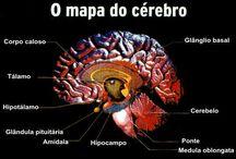 neuro+anatomia