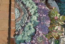 Garden: Succulents / I'm a HUGE fan of succulents, love tucking them here and there around the garden - tough and nails yet so beautiful!