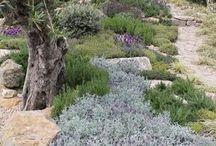 natural portugal garden