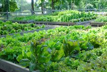 Potager & Vege garden - design ideas