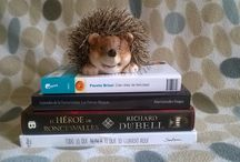 Vinieron para quedarse... / Libros nuevos que pueblan mi estantería - My little bookshelf with new books! :)