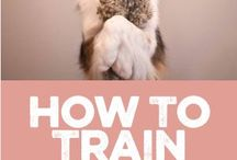 Dogs: Training Tricks & Yard Ideas