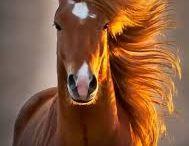 Caballitos / Me gustan los caballos