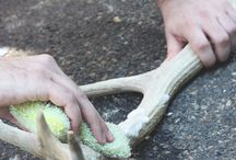Antler cleaning