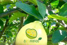 Arance, limoni, mandarini e avocadi biologici 100% certificati / Arance, limoni avocadi biologici