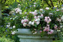 garden and flower