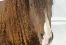 Dusty Dan:Horses / Horse Stuff,Breeds,Tack,ect
