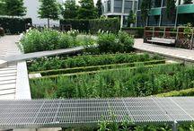 Bioretention + Raingarden