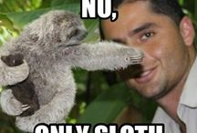 Sloth Memes / Our favorite sloth memes