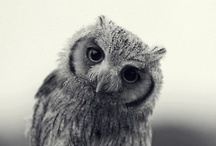 Owls / by Kylie Sanders