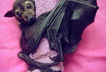 Bats & Sphynx cats & ...