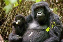 Charme du Rwanda