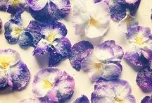 Flowers: crystallised and live