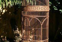 Bird cage / Next Pet Project - Geopelia cuneata