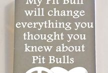 PITS / Dogs