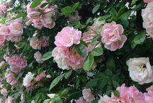Flower / Flower flower