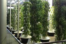 Urban Gardening - Greenery