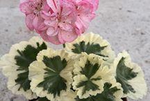 Folhagem/flores