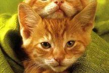 koty i