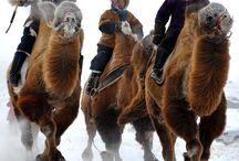Mongolia / by Zdenka Sušec