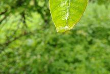 nature / green