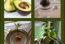fra frø til planter inne