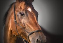 MY LOVE - HORSES
