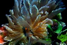 By the sea... And under water beauty / by Robin Sekiguchi