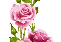 IL PROFUMO DELLE ROSE ...CARLA™ εї3