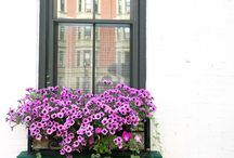 · window boxes ·