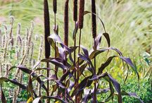 Grasses & Trailing Vine Plants