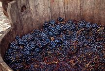 Harvest Season 2014 / We are excited to harvest our grapes this fall!