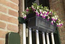 Bella Fuchsia balcony / #Bella #Fuchsia #garden #balcony #plant #flowers