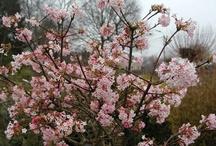 struiken/bomen/planten tuin