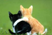 Cute Cats / by Affiliate Marketing Tips