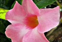 Flower Freak