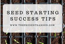 Seed Starting and Saving / How to grow and save seeds.