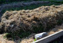 How to make a NO DIG garden / Inspiration of how to make a nog dig garden. Simple and easy!