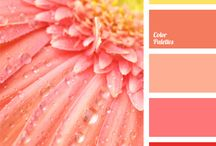 palet warna oren