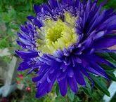 Kwiaty w moim ogródku