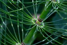 Nature template - Plants,Fungi, Lichens
